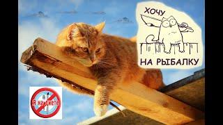 Смешные кошки и собаки.Лучшее видео.РЕМЕЙК..Funny videos about cats and dogs.