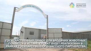 Государственный приют для бродячих животных появится в Астане