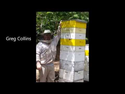 Greg Collins and his 3 Deep Hive of Aggressive Russian Honey Bees