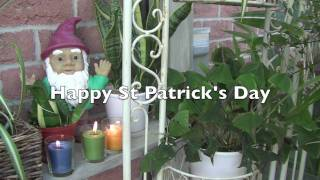 Caring for your shamrock plant