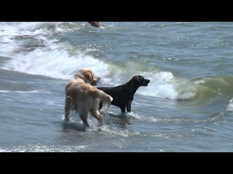Life's a beach for Italy's dogs