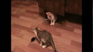 веселые котята и  заводная мышка Cats are playing !!!.mpg
