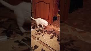 Кот после капель антисекс
