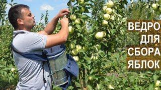 Супер ведро для бережного сбора яблок. Яблоневый сад КФХ Берзой