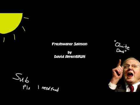 David AttenBRUH - Freshwater Salmon (Attenborough Rapping)