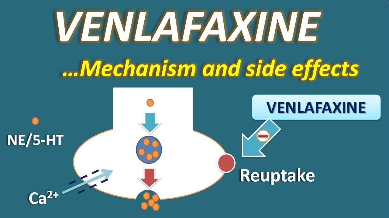 Venlafaxine - Mechanism and side effects - YouTube