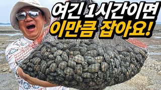 Tremendous clams! Garolim Bay in Korea, the world's five largest mudflats
