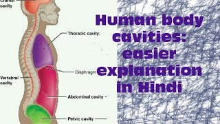 Human body cavities: easier explanation in hindi
