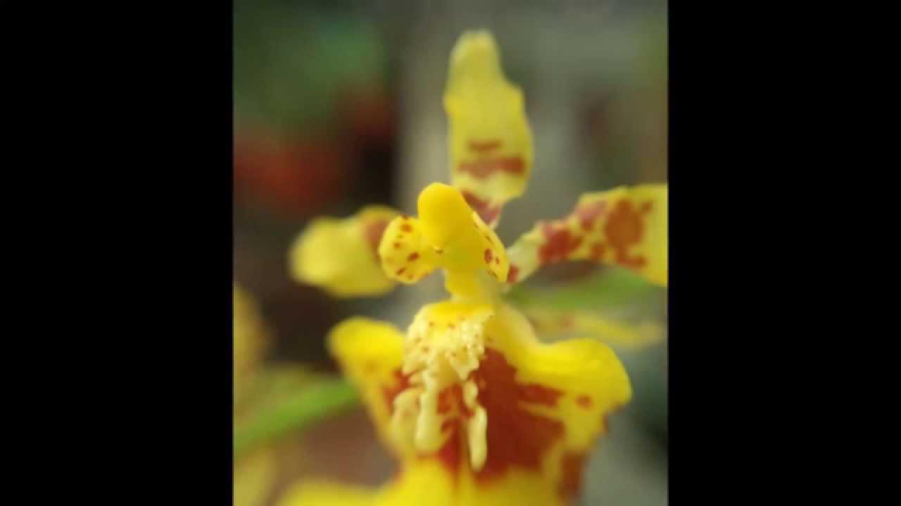 Kenny G Jasmine Flower Mp3 Images Flower Wallpaper Hd