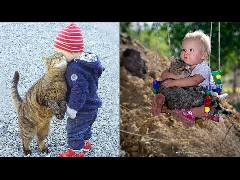 Cute baby and pets  A cute baby and a cat  A baby and a cat play extremely funny