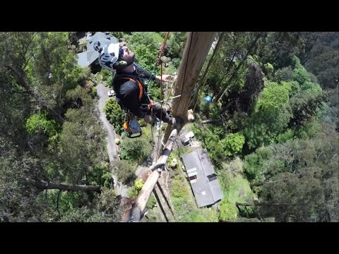 Sherbrooke Mountain Ash Dismantles 2
