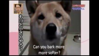 Собака яка вміє говорити по-японськи пошепки
