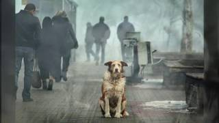 Клип про преданность собак. До слёз.