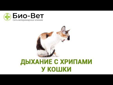 Может ли болеть горло у кота