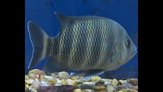 Humans are ingesting fish antibiotics to treat their own illnesses