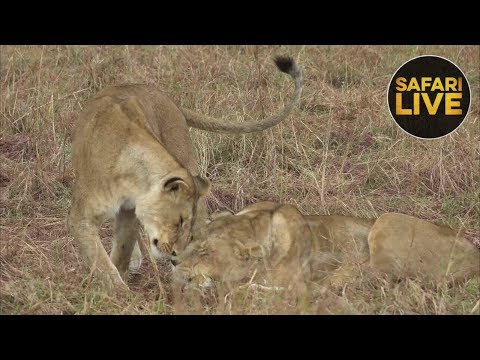 safariLIVE - Sunset Safari - October 17, 2018
