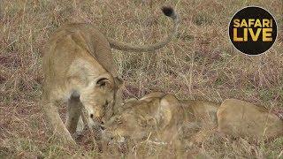 safariLIVE - Sunset Safari - October 17, 2018 thumbnail