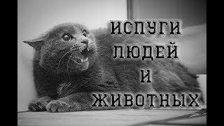 Смешные испуги людей и животных | Funny Fright