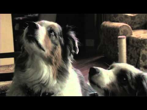 STOP! QUIET! OFF! Dog Training Spray