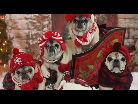Pug Joys of Christmas