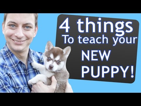 4-things-to-teach-your-new-puppy-right-now!