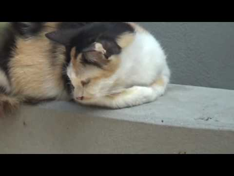 Funny cats scared of random things   Funny cats compilation