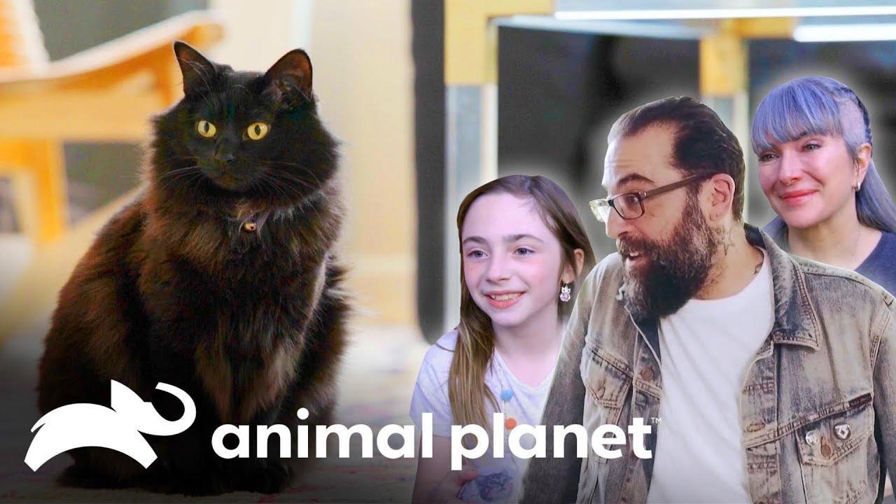 Essa gatinha precisa subir na árvore | Um Lar para Pets | Animal Planet Brasil
