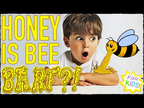 Is Honey BEE BARF?? All About Honey!  [For Kids!]