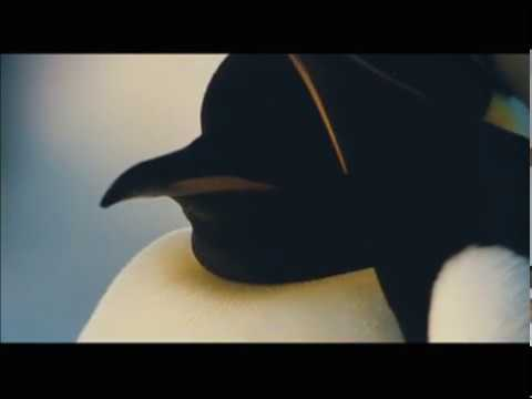 A BAIXAR MARCHA DOS PINGUINS FILME