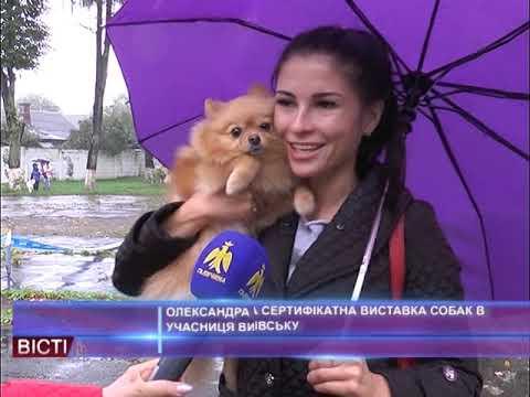 Національна сертифікатна виставка собак