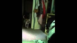 Puppy Versus Alpha Dog
