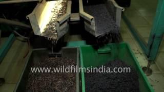 Tea producing factory in Sri Lanka