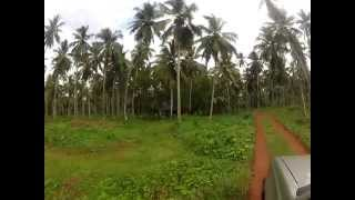 Sri Lanka Coconut Plantation