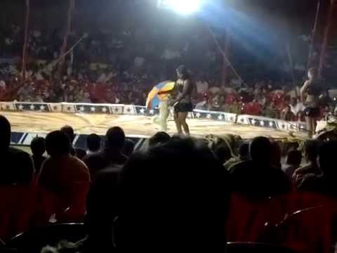 Funny Dog In Circus