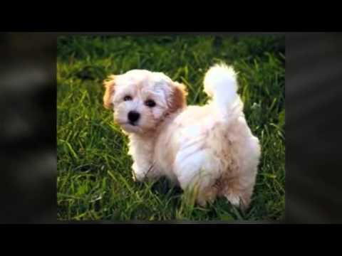 best small dogs as small dogs are cute - YouTube