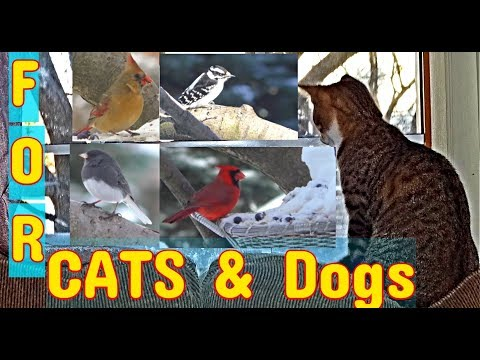 "Videos for Cats and Dogs ""Cats do Backflips for this'"