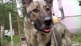 Тренировка моей собаки.Айда.Собака-паркурист.(, 2014-08-11T16:38:49.000Z)