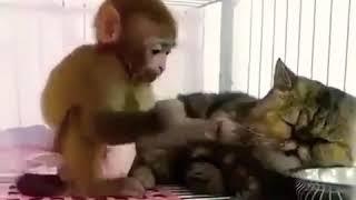 Обезьяна и кот - лучшие друзья Video with cat Monkey and cat - best friend