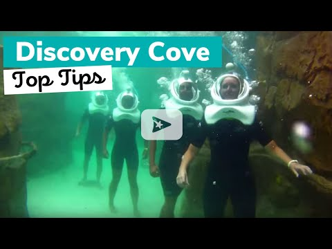 Top Tips For Visiting Discovery Cove