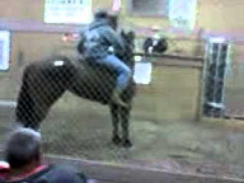 Mira Loma Horse Auction