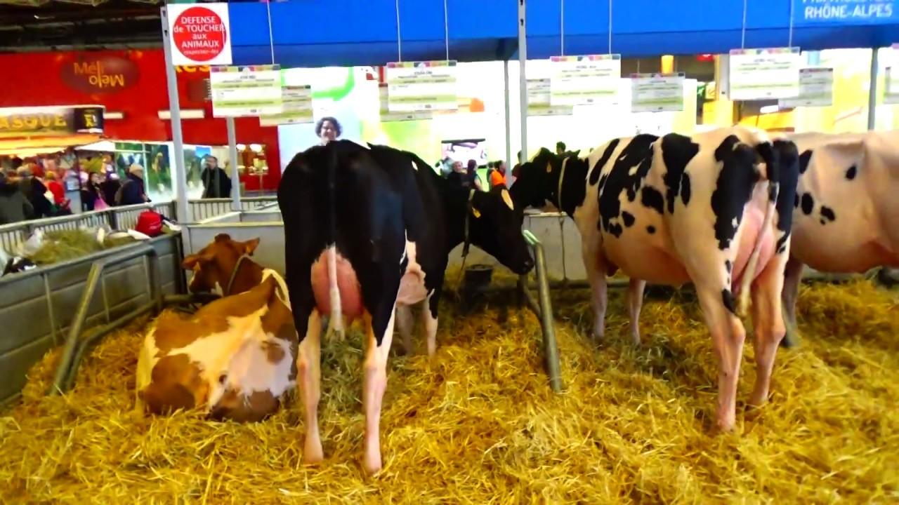 Salon de l 39 agriculture 2017 vache 2 youtube for Vache salon de l agriculture