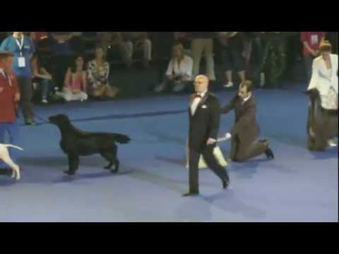 Best in Show - Euro Dog Show 2012 Bucharest, Romania