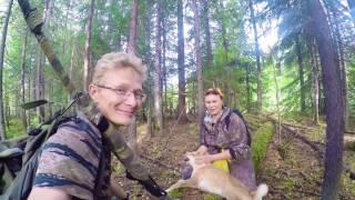 Щенок лайки, охота 4