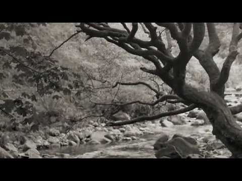 Down by the River by Neil Young in 1080p