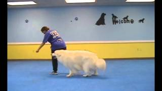 Teach Your Dog To Sit In Front Of You, Return To The Heel Position & And Swing To The Side