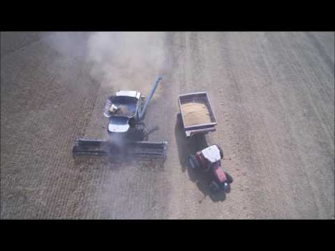 Gleaner S77 Soybean Harvest(Drone video)