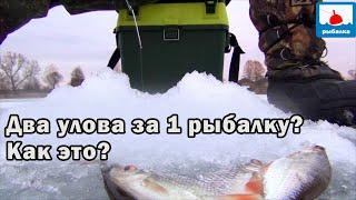 Зимняя рыбалка с двойным уловом КАК ЭТО ВОЗМОЖНО