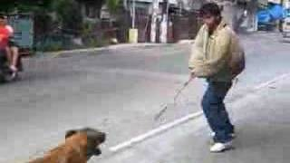 Protection Dog Training In Public (reality Check) 2