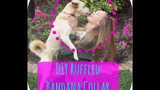 DIY Dog Ruffle Collar