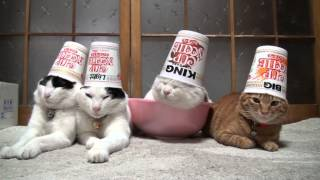 頭や脚に物を乗せられても全く動じない猫四匹組が可愛すぎる